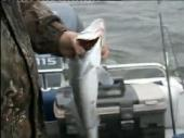 Снасти для осенней рыбалки (2011) SATRip