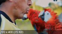 BBC: Мир с высоты птичьего полета. Новые горизонты / Earthflight. Flying High (2011) SATRip