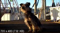 Пес-купидон / Gabe the Cupid Dog (2012) DVD5 + DVDRip 1400/700 Mb