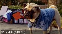 Крошка из Беверли-Хиллз 3 / Beverly Hills Chihuahua 3: Viva La Fiesta! (2012) DVDRip (ENG)