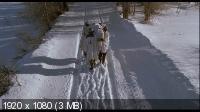 Полуночная чистка / A Midnight Clear (1992) BD Remux + BDRip 1080p / 720p + HDRip 2100/1400 Mb